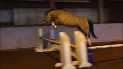 Dickie loose jump oct 2018 1.png