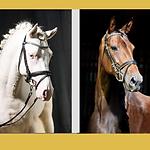 Formosus Sporthorses ad.png