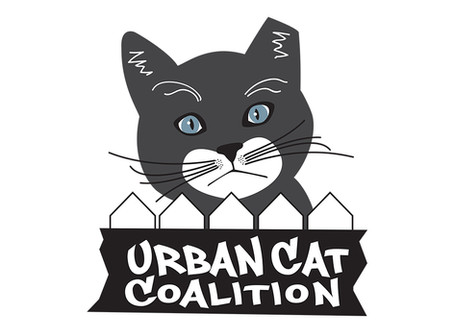 Urban Cat Coalition - Our Story