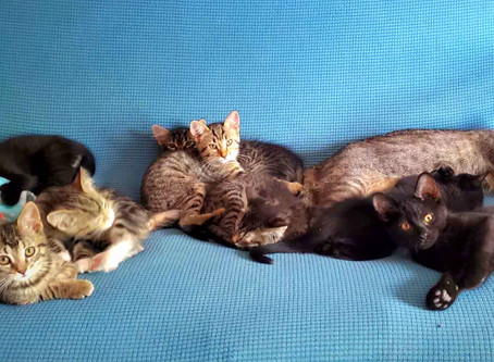 Urban Cat Coalition continues to grow!