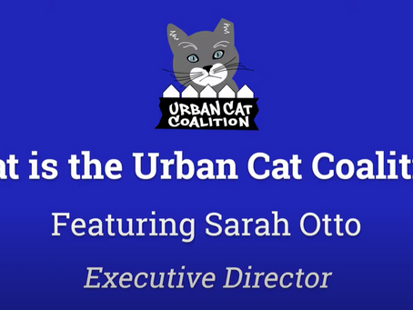 What is the Urban Cat Coalition?