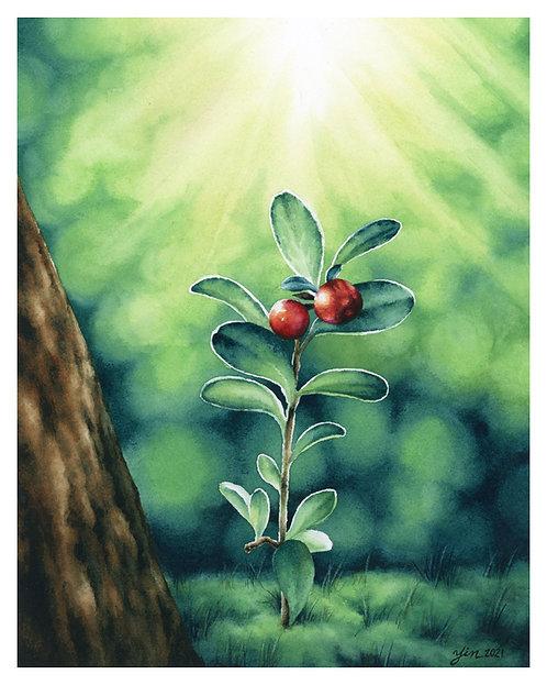 Growing Into Hope