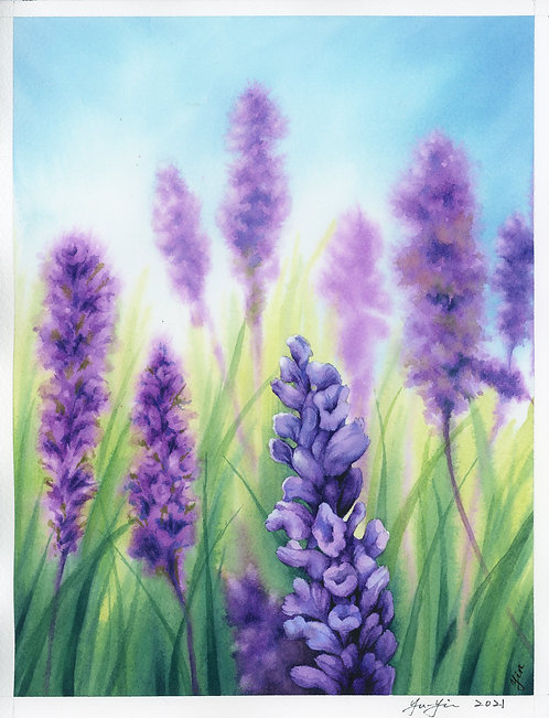 The Memory of Lavender