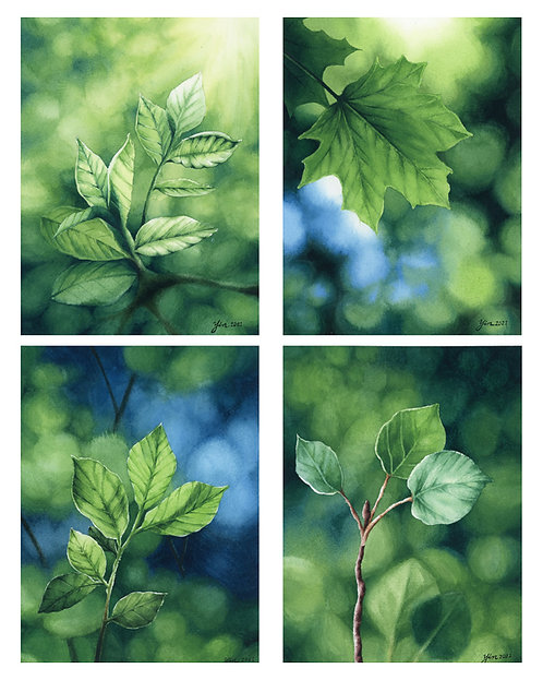 The Magic of Greens- Collection