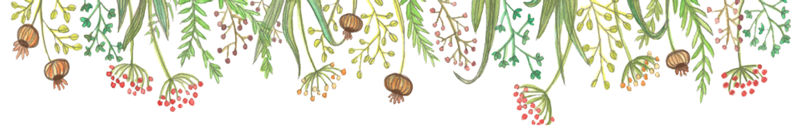 WIXbande-de-fleurs--transparent.png