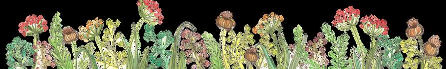 WIXbande-de-fleurs-bas-transparent.png