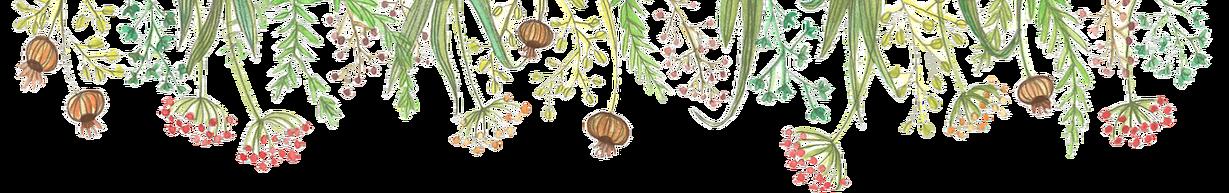 WIXbande-de-fleurs--transparentnew.png