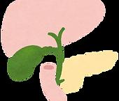 加齢による肝機能の変化|西山動物病院|流山市・松戸市・柏市・野田市