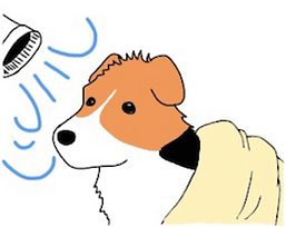 シャンプーの仕方 |西山動物病院皮膚科専門診察|流山市・松戸市・柏市・野田市・三郷市・千葉・埼玉