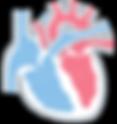 加齢による心臓の変化 西山動物病院 流山市・松戸市・柏市・野田市