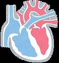 加齢による心臓の変化|西山動物病院|流山市・松戸市・柏市・野田市