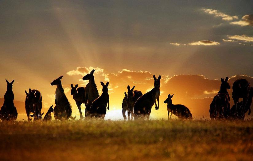 kenguru-avstraliya-nebo-oblaka.jpg
