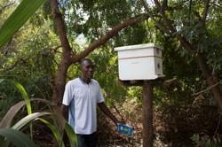 Working beehive