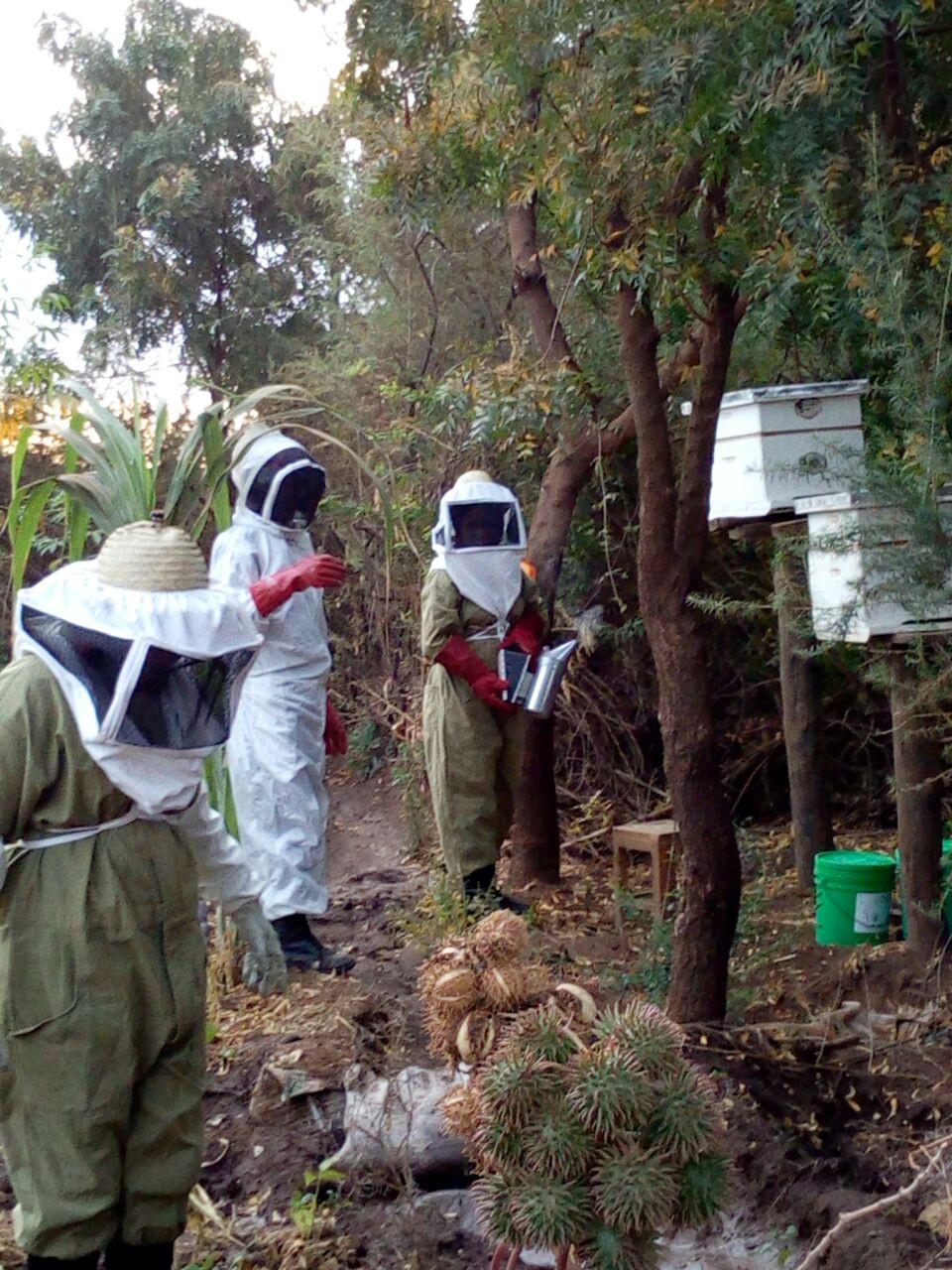 KiliTech beekeepers in Majengo Village