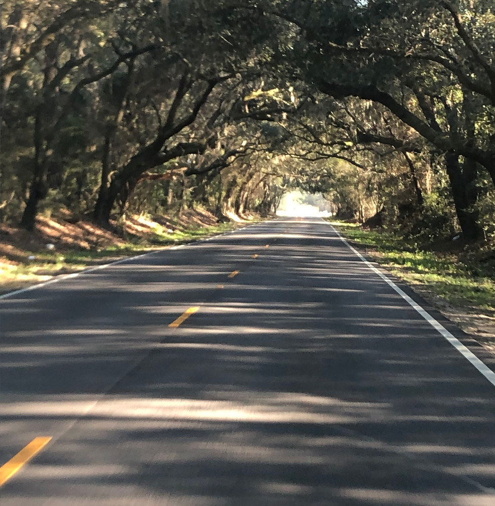 River Road shaded by oak trees