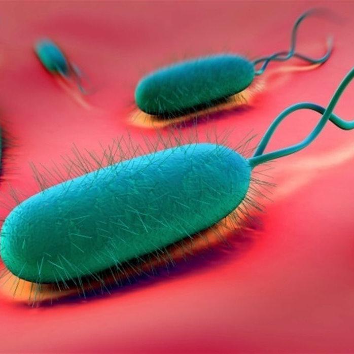 Anti Heliobacter pylori IgG