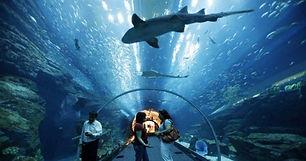aquario balneario.jpg