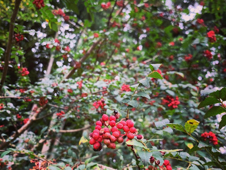 赤い秋みーつけた