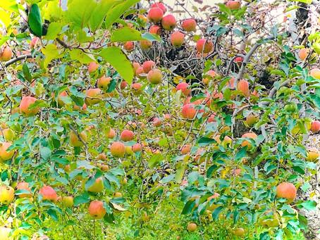 アップルパイの循環