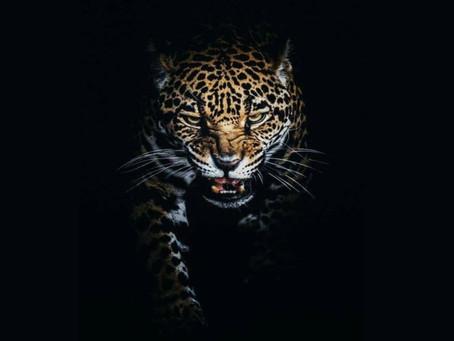 """Livro """"selvagem"""" é o próximo lançamento de nosso novo autor"""