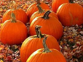 Loving the Fall