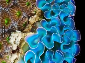 Sea Slug Self-care