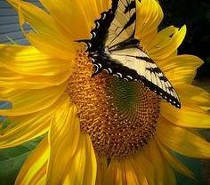 Meditations on Yellow