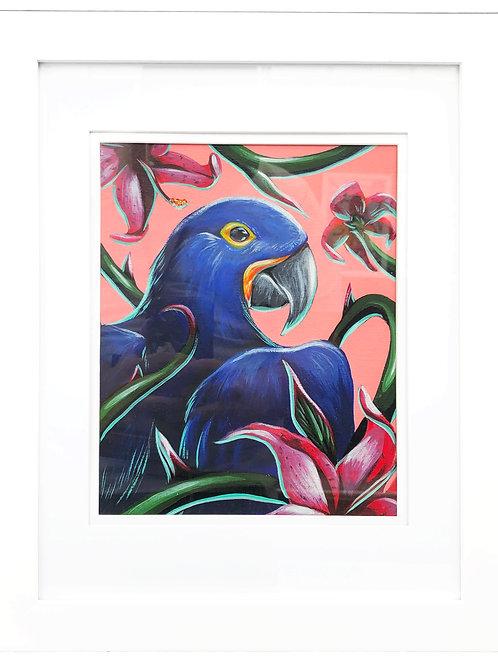 Hyacinth Parrot
