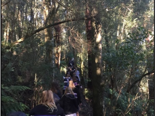 Year 7 Science: Melba Gully Ecosystems Tour