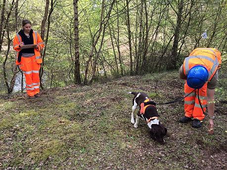 Atkins GCN detection dog search (Arnie).