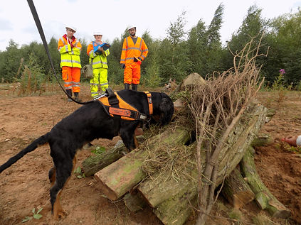 Atkins - detection dog GCN search.jpg