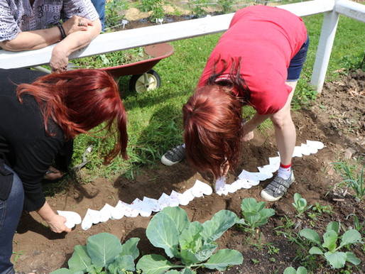 Pledge and Plant