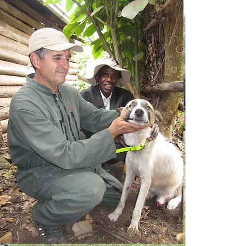 Donació per vacunar un gos enfront la RÀBIA