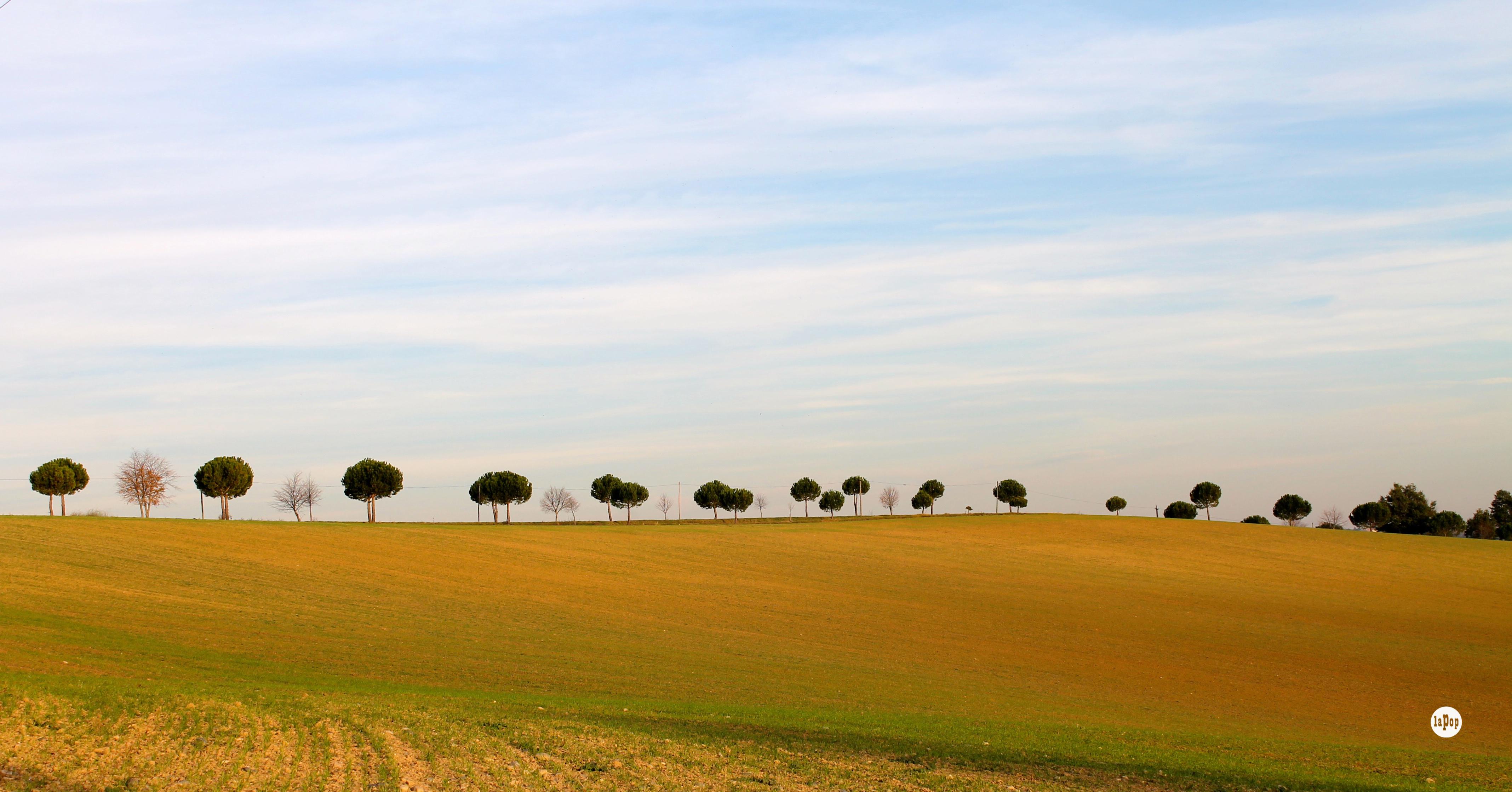 Les arbres de la colline