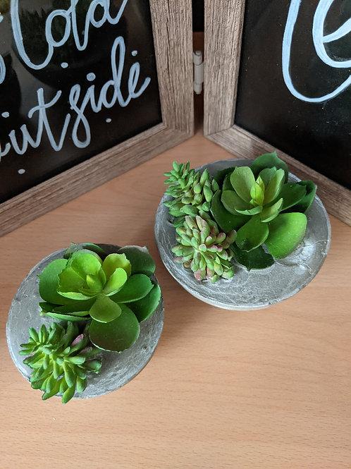 Cement Succulents