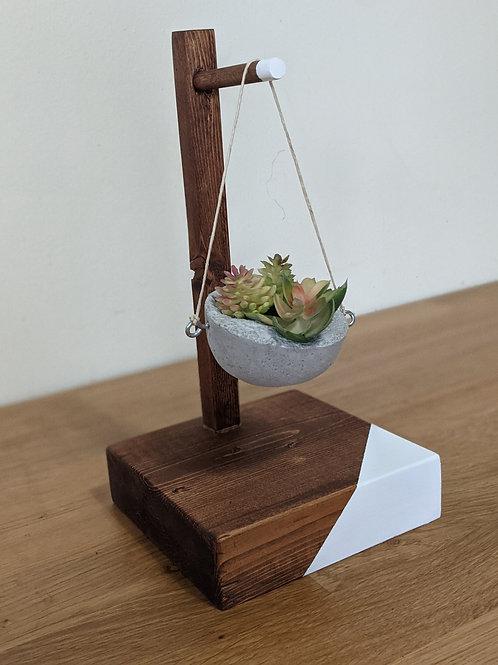 Succulent display