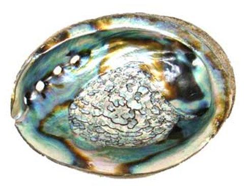 """Abalone Shell Burner 3 -4"""""""