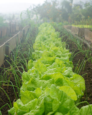 Inicio orgánica Jardín