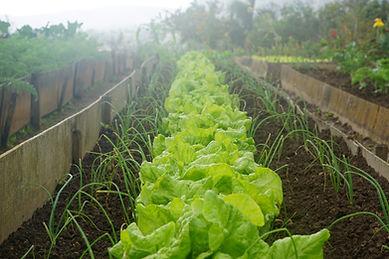 Organic Garden Home