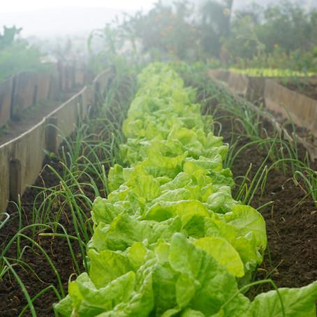 Planting Your Spring Prepper Garden