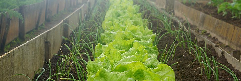 WHLS Enhanced Peat Rich Living Garden Blend
