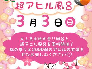 *3月3日は桃の香り風呂*