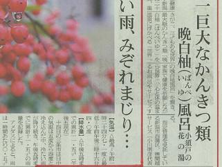 「三條新聞」に世界一の晩白柚風呂が掲載されました!