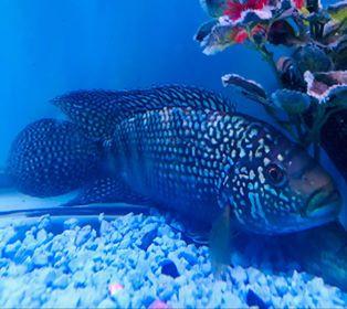 Freshwater Fish 7/24