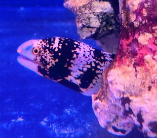 Saltwater Fish 9/4