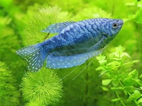 Freshwater Fish 4/30