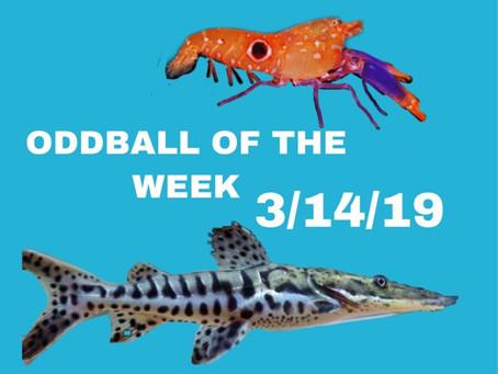 ODDBALL OF THE WEEK 3/14/19