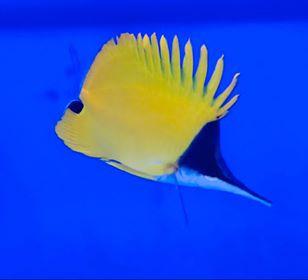 Saltwater Fish 5/27
