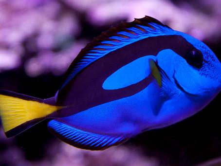 Saltwater Fish 6/15
