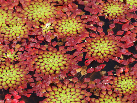 NEW ARRIVALS: PLANTS 3/8/19